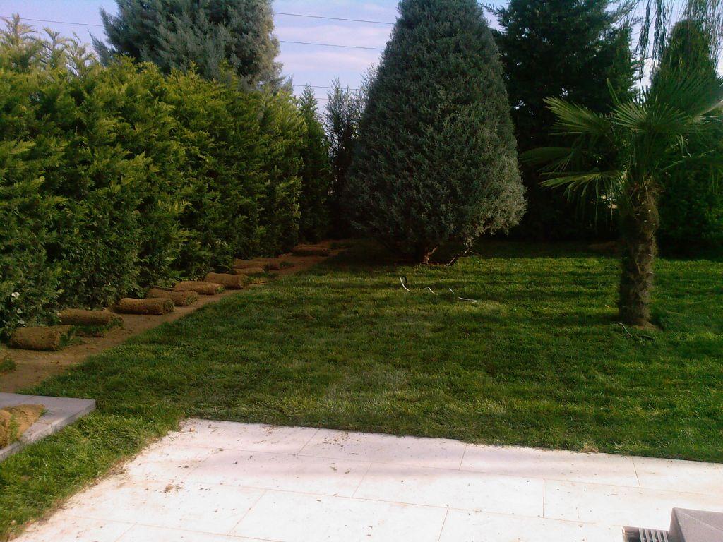 Baharda çim bakımı. Uyan